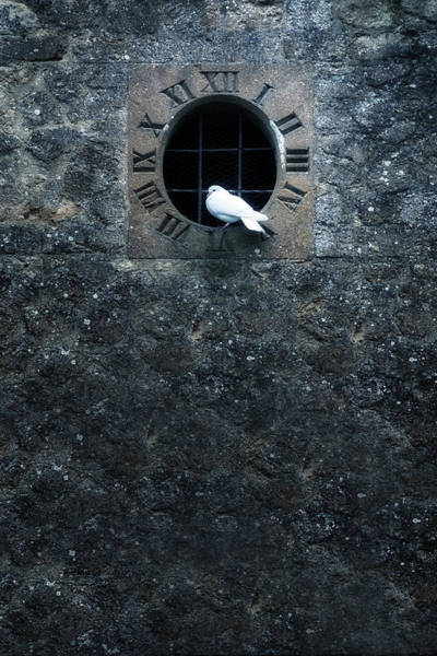 Clock Tower Photograph - White Dove by Joana Kruse