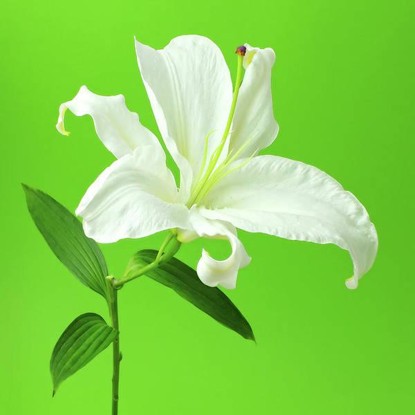 Wall Art - Photograph - White Easter Lily On Green by Juj Winn