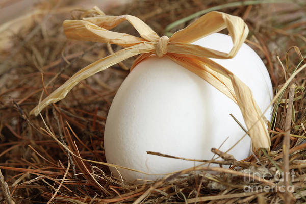 Photograph - White Egg With Bow On Straw  by Sandra Cunningham