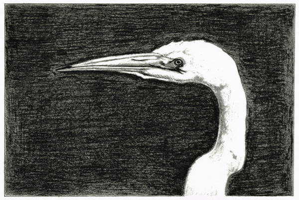 Painting - White Egret Art - The Great One - By Sharon Cummings by Sharon Cummings