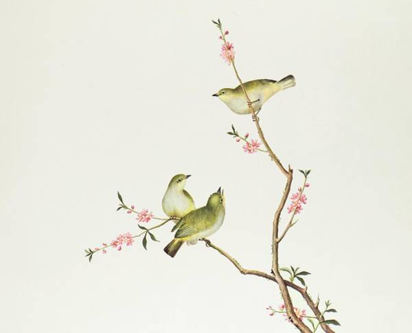 Ch Painting - White Eye Bird by Chinese School