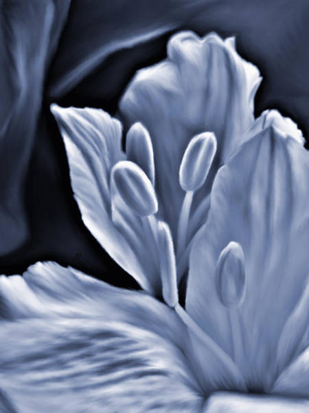 Photograph - White Feathers by Barbara St Jean
