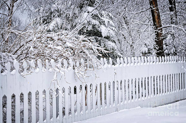 Wall Art - Photograph - White Fence With Winter Trees by Elena Elisseeva