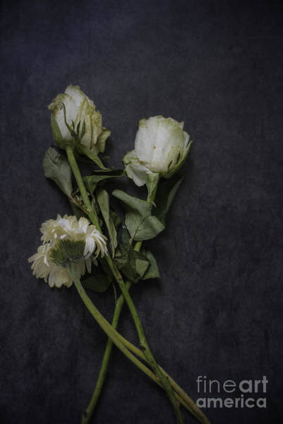 Photograph - White Flowers by David Lichtneker
