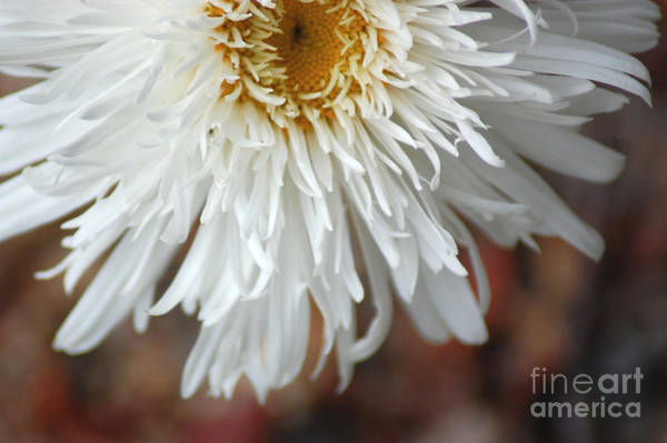 Photograph - White Flowers by Donna Bentley