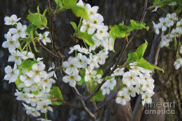 Photograph - White Flowers In The Forest Painterly by Andee Design
