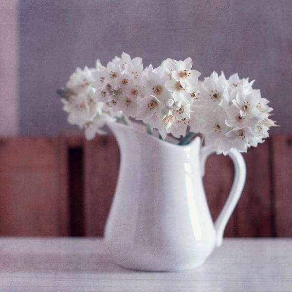 Fragility Photograph - White Flowers In White Pitcher by Copyright Anna Nemoy(xaomena)