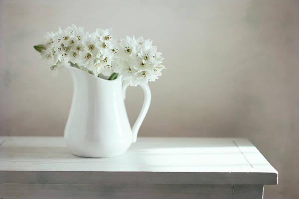 Fragility Photograph - White Flowers In White Pitcher On White by Copyright Anna Nemoy(xaomena)