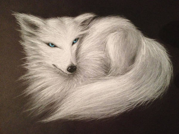 Drawing - White Fox by Patricia Lintner