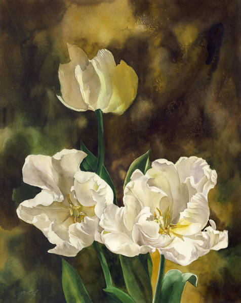 Painting - white French tulips by Alfred Ng