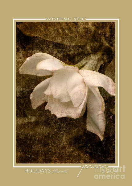 Photograph - White Gardenia Flower Christmas Cards by Jai Johnson
