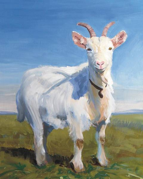 Painting - White Goat by Mike Jory