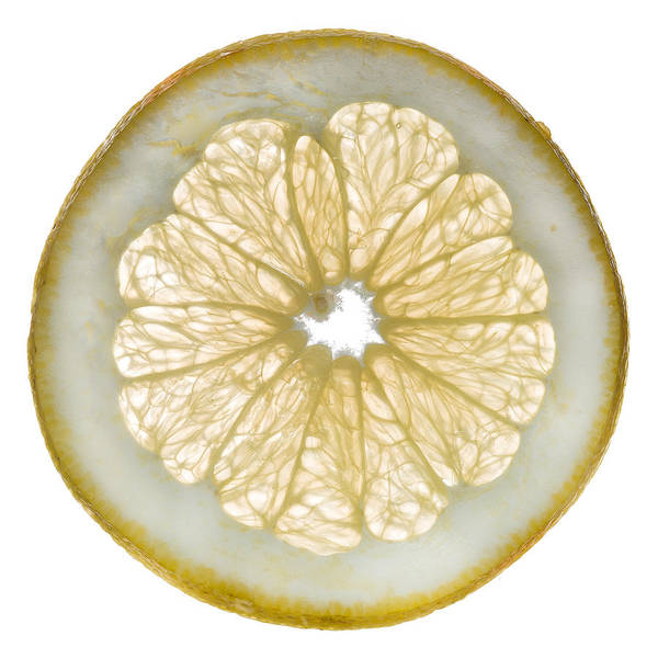 Wall Art - Photograph - White Grapefruit Slice by Steve Gadomski