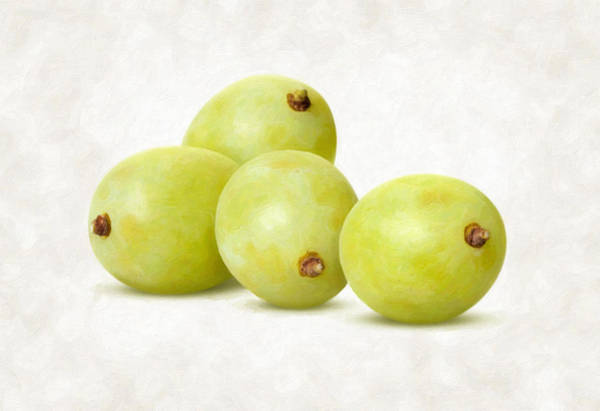 Wall Art - Painting - White Grapes by Danny Smythe