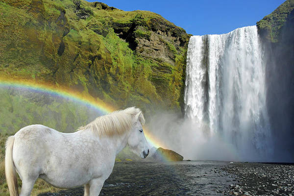 Wall Art - Photograph - White Horse And Waterfall by Images Etc Ltd