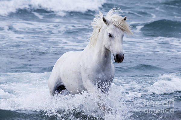 Wall Art - Photograph - White Horse Comes Out Of The Waves by Carol Walker