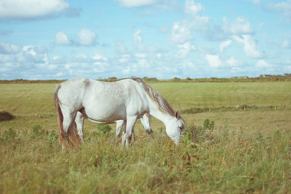 Connemara Photograph - White Horse Grazing In Connemara by Kay Maguire