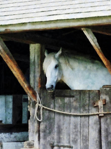 Photograph - White Horse In Stable by Susan Savad