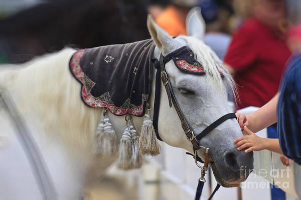 Photograph - White Horse by Jill Lang