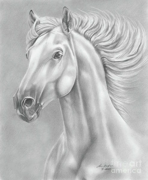 Equine Drawing - White Horse by Lena Auxier