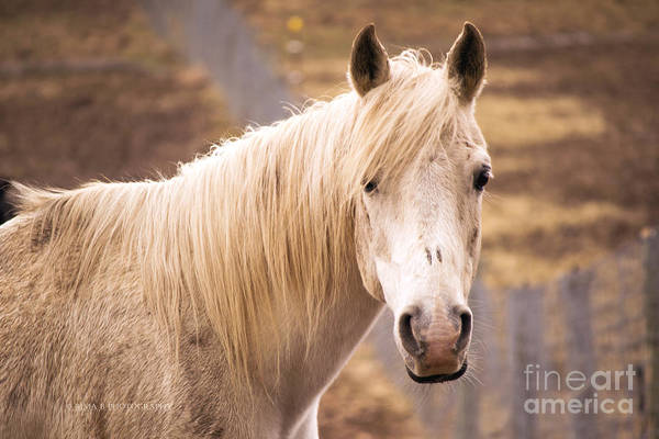Photograph - White Horse by Rima Biswas