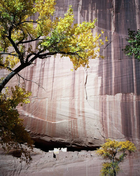 Wall Art - Photograph - White House Ruins, Canyon De Chelly by Ron Koeberer