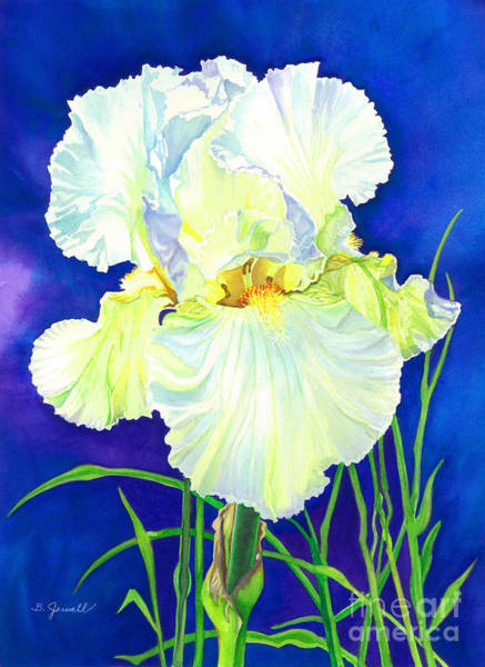 Wall Art - Painting - White Iris by Barbara Jewell