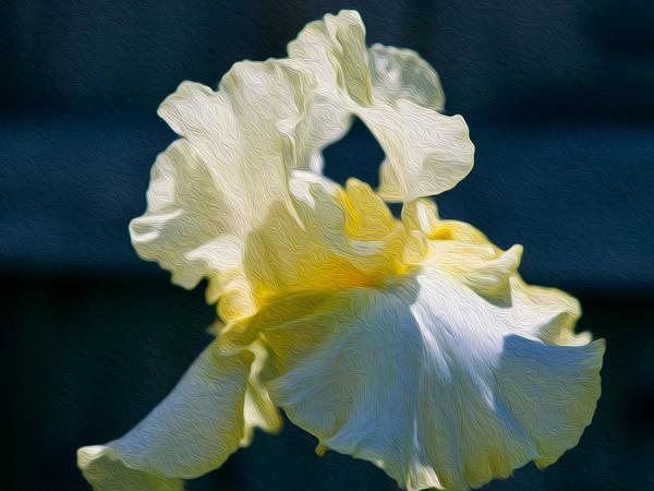 Painting - White Iris With Yellow by Omaste Witkowski