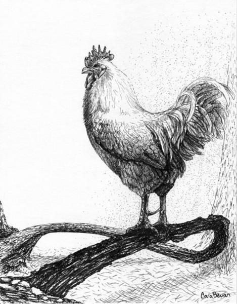 Avian Drawing - White King by Cara Bevan