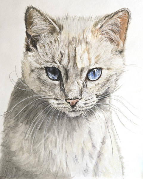 Painting - White Kitten With Blue Eyes by Kate Sumners