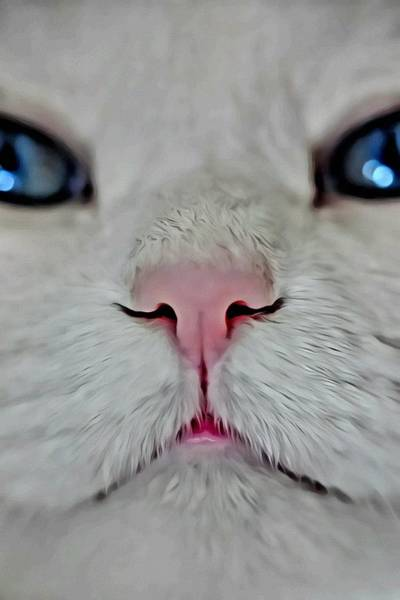 Painting - White Kitty Close Up by Florian Rodarte