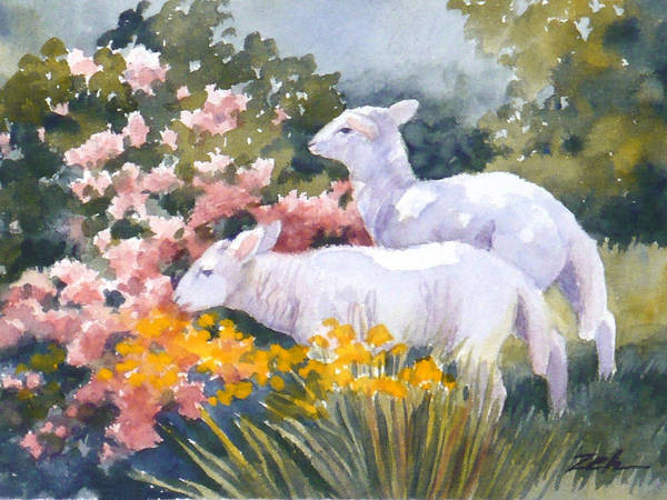 White Lambs In Scotland Art Print