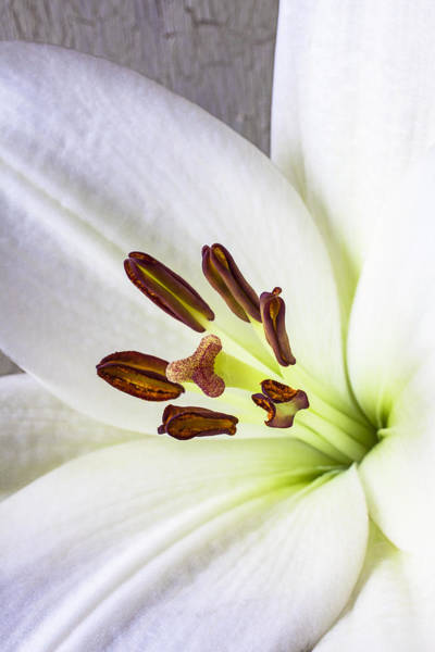 Stamens Photograph - White Lily Close Up by Garry Gay