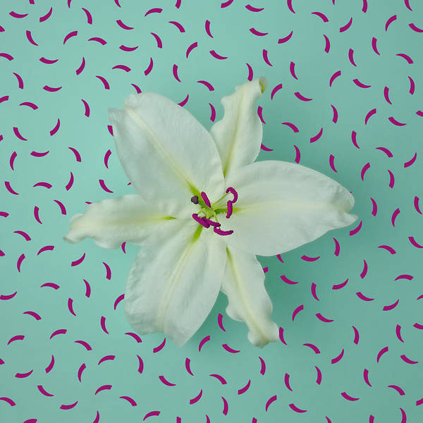 Sparse Photograph - White Lily On Patterned Background by Juj Winn