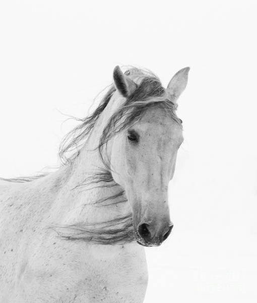 Andalusian Wall Art - Photograph - White Mare In The Snow by Carol Walker