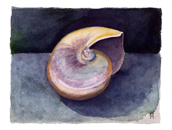 Painting - White Nautilus by Katherine Miller
