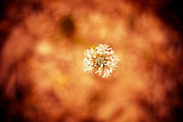 Photograph - White On Orange by Darryl Dalton