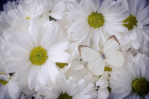 Softly Photograph - White On White by Garry Gay
