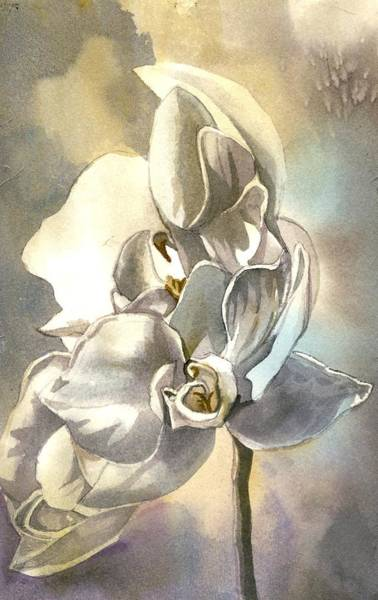 Painting - White Orchid by Alfred Ng