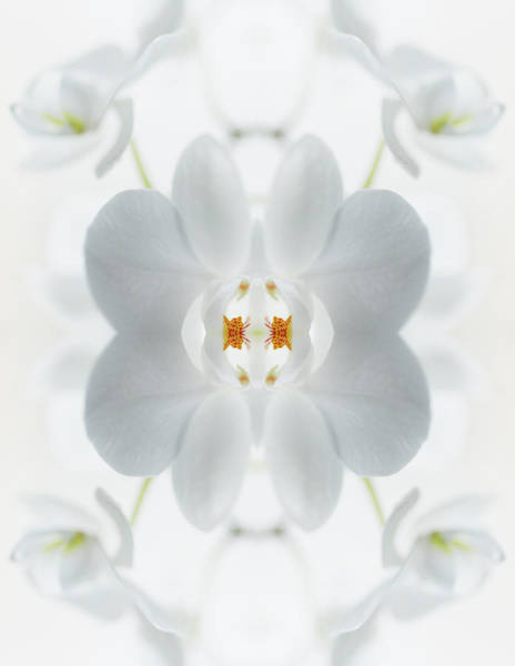 Photograph - White Orchid Flower by Silvia Otte