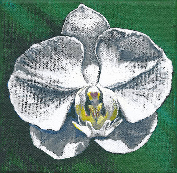 Painting - White Orchid I by Joan Garcia