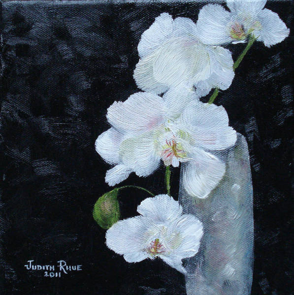 Bridesmaids Painting - White Orchid by Judith Rhue
