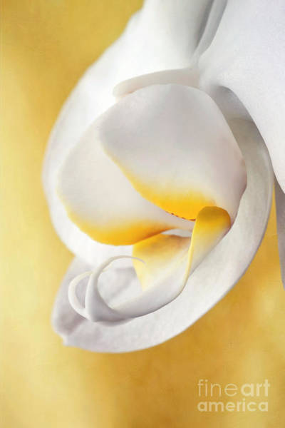 Wall Art - Photograph - White Orchid by Priska Wettstein