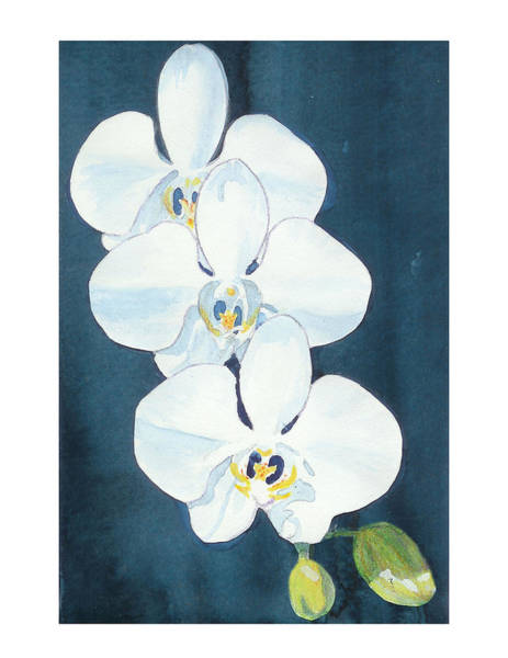 Painting - White Orchids by C Sitton