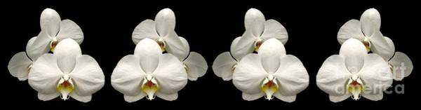 Photograph - White Orchids Panorama by Rose Santuci-Sofranko