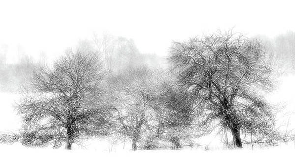 Photograph - White Out by Vickie Szumigala