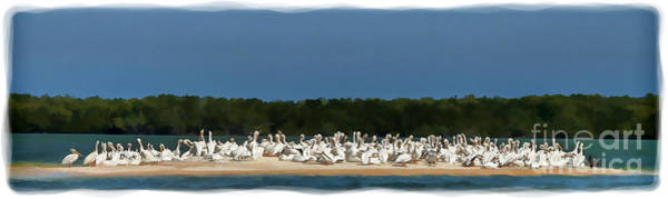 Photograph - White Pelicans On Sand Island In Everglades by Dan Friend