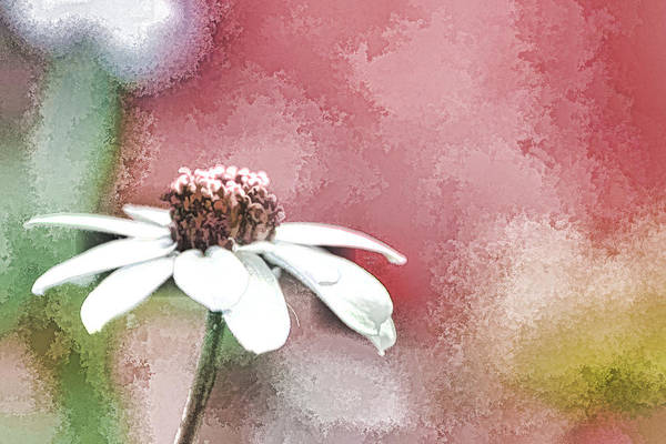Mixed Media - White Petals by Trish Tritz