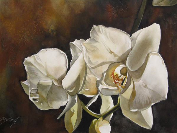 Painting - White Phalaenopsis Orchid by Alfred Ng