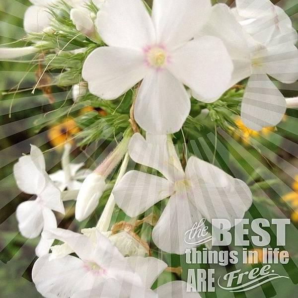 Bloom Photograph - #white #phlox #garden #flower #bloom by Teresa Mucha